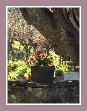 chalet jardin 1