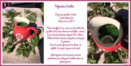 Infusion d'ortie